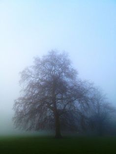 Misty morning in Clapham common