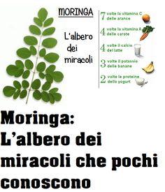 In Natura, Veggie Patch, Weight Loss Challenge, Reiki, Detox, Herbs, Wellness, Stress, Health