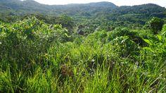 Pueblo Nativo de Huacaria