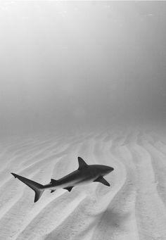 Resultado de imagem para shark tumblr