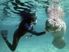 Yay! This is comforting. I could do this! Swim with #manatees in Crystal River, #Florida