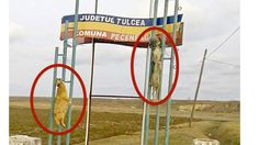 Dogs left to hang like clothes on washing line on village's welcoming sign! ACT NOW!
