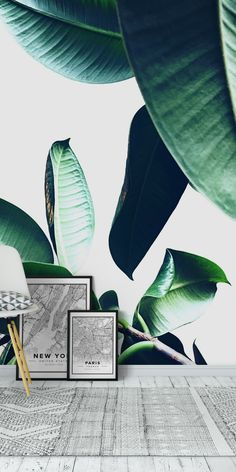 Ficus Elastica 26 wall mural from happywall - Nature wall murals - Ficus Elastica, Tropical Vibes, Green Plants, Rum, Wall Murals, Buy Art, Plant Leaves, Paradise, Cave