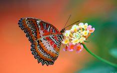butterfly on flower-wide.jpg