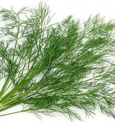 Dill: How to Make & Health Benefits Unprocessed Food, Holistic Medicine, Healing Herbs, Juice Smoothie, Health Eating, Jaba, Natural Cures, Organic Recipes, Herbal Remedies