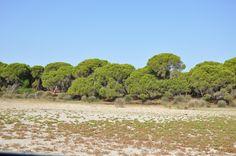 Parque Nacional Donana, Spain, 2012