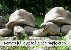 Schilpaddensoep? turtle soup? Remove or change text and send this funny invitation for dinner from Kaartje2go - dieren.