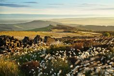'Bobbing Cotton Grass' creates a sense of movement in this picture near Windgather Rocks, Peak District, England, by Jackie Robinson Most Romantic Places, Beautiful Places In The World, Best Photographers, Landscape Photographers, British Travel, England And Scotland, Peak District, In Ancient Times, Wonders Of The World