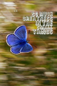 So much greatness in the small things. Small Things, Affirmations, Wordpress, Fashion, Moda, Fashion Styles, Fasion, Positive Affirmations, Confirmation