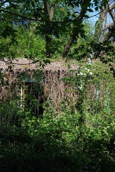 a abour completely overgrown by climbing plants. Lost Place Urban Exploration  Berlin https://www.facebook.com/ForgottenHideaways Copyright by ForgottenHideaways