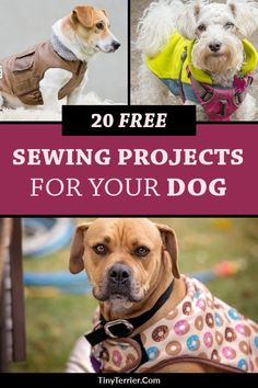 Dog sewing patterns - 20 Free Sewing Projects for Dogs – Dog sewing patterns Dog Clothes Patterns, Sewing Patterns Free, Free Sewing, Coat Patterns, Skirt Patterns, Blouse Patterns, Baby Sewing, Sewing Hacks, Sewing Tutorials