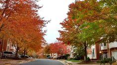 Show me the colors #autumn