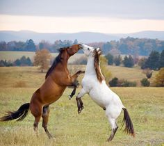 I LOVE horses! So cute to see them in action!