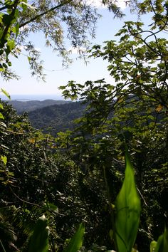 El Yunque Forest a great view from one of the walk ways