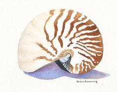 Nautilus Seashell Beach Shell Art Print Painting of Original Watercolor, Barbara Rosenzweig Etsy Reproduction Beach Seashore Home Decor Gift...