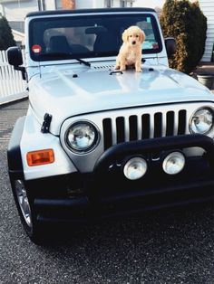 Sell me a Jeep, if Golden Retriever comes with it! Cute Baby Animals, Funny Animals, Cute Puppies, Dogs And Puppies, Doggies, Jeep Jeep, Wrangler Jeep, Jeep Pickup, Black Horses