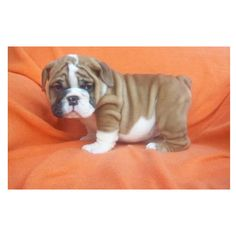 I want this dog can someone find him please for me!!!!