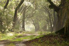 Sheldon Plantation, South Carolina