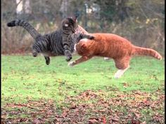 Ninja Cats. how could this not make you laugh??