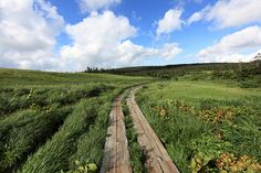 Boardwalk / 木道(もくどう)    Hachiman-numa(swamp), Hachimantai-shi(city) Iwate-ken(Prefecture), Japan    岩手県八幡平市(いわてけん はちまんたいし) 八幡沼(はちまんぬま)付近(ふきん)