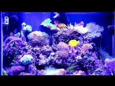 Here is a video of my previous set up: 65 Gallon Saltwater Fish Tank