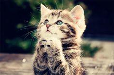 kittens | Even Cute Kittens Pray