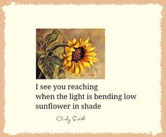 haiku~ sunflower in shade  Cindy Smith