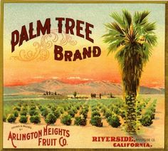 Arlington Heights CA, Palm Tree Brand fruit crate label
