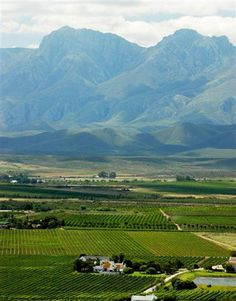 The De Wet family have farmed at Excelsior Estate, in the Robertson wine valley, since Farms, African, Wine, Homesteads