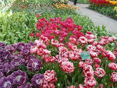 ... Floral Wreath, Wreaths, Flowers, Plants, Decor, Decoration, Decorating, Door Wreaths, Flora