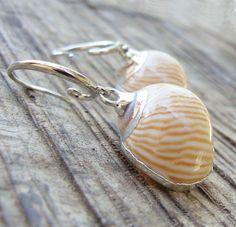 Sea Treasure Collection - Natica Lineata Shell Earrings