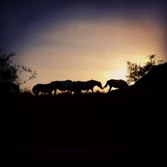 Free Horses at Sunrise