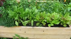 Growing organic vegetables in container garden