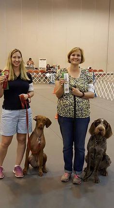 Odin! Fix your ear!!!! Houston World Series of Dog Shows 2015