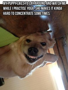 That's hilarious! Does your dog have odd habits like that?