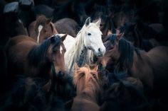 Horses by Mehmet Turgut Kirkgoz