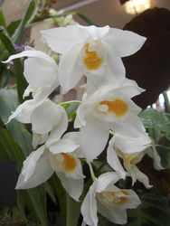 Orkidegalleri