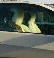 Leopard print seat belt.cover