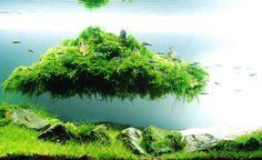 planted aquarium.