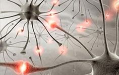 Sanford-Burnham researchers convince transplanted stem cell-derived neurons to direct cognitive function—getting us a step closer to using these cells to treat Alzheimer's disease and other neurodegenerative conditions. Fatigue Causes, Chronic Fatigue Syndrome, Fibromyalgia Causes, Chronic Pain, Endometriosis, Epilepsy Symptoms, Epilepsy Drugs, Treating Fibromyalgia, Epilepsy Awareness