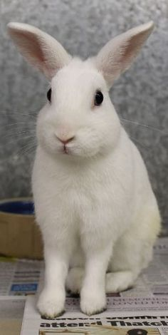 Vax at Woodside Animal Sanctuary, adopt a bunny rabbit