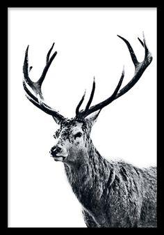 posters och prints med fotografier av djur