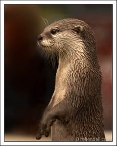 http://farm4.static.flickr.com/3418/3870476520_6bd739a922_o.jpg  #otter