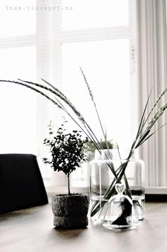 Beachstraws in a TineK vase Interior Architecture, Interior Design, Building A House, Beautiful Homes, Stems, Simple, Vases, Flowers, Plants