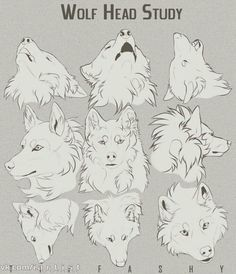 Drawing Animals Wolf Head Study/Tutorial by TIFFASHY - Welcome to Drawing Den, an online collection of the most helpful art resources and tutorials! Animal Sketches, Animal Drawings, Drawing Sketches, Drawing Animals, Wolf Drawings, Drawing Tips, Manga Drawing, Dog Drawing Tutorial, Eye Tutorial