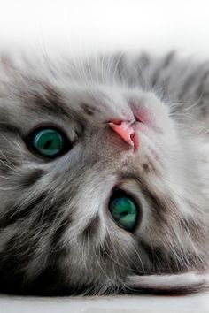 Cute, but I bet the eye color is Photo-shopped.