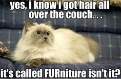 Love the cat and expect the furry couch