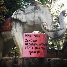 #takeawalk #inspire #nature #quotes #elephant #EKinThailand #thailand #travel #createyourlife #lifesajourney #create #beautywithin #positivity #innerstrength #journeywithin #namaste #mothernature www.elizabethkoh.com