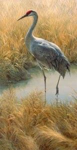 Sandhill Crane wildlife art print, Joni Johnson Godsy