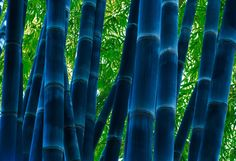 Master Photographer Peter Lik has spent over 35 years pushing the boundaries of fine art. A self-taught pioneer in the field of landscape photography, Lik is internationally renowned for capturing the beauty and raw power of the world around us. Peter Lik Photography, Fine Art Photography, Landscape Photography, Forest Color, Black Bamboo, Beautiful Places To Travel, Texture Design, Worlds Of Fun, Landscape Photos